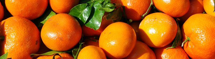 Pretty Oranges grown with Organic Fish Fertilizer